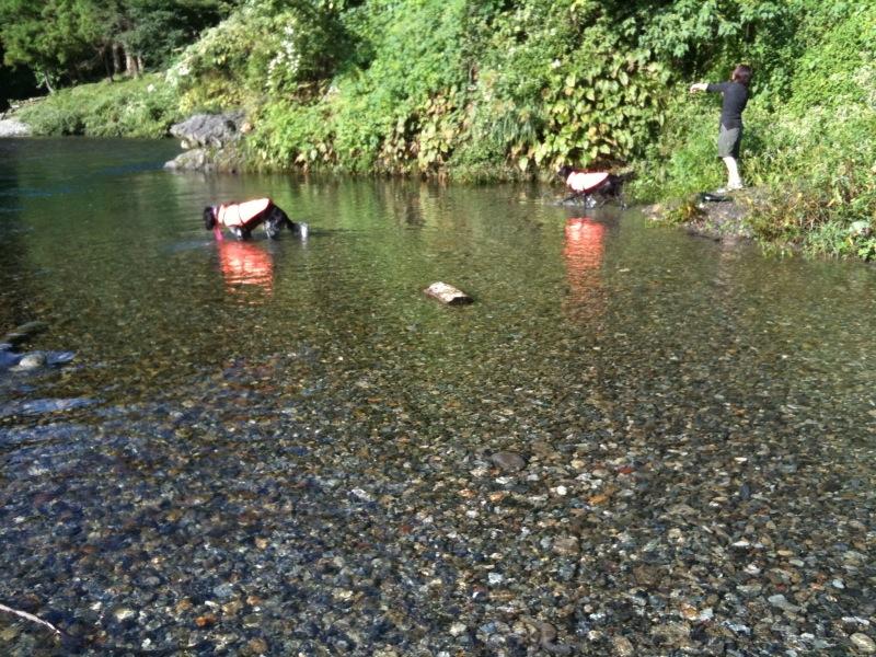 秋川で川遊び
