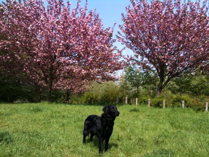 花は桜だけ?